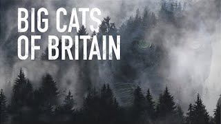 Big Cats of Britain  Grizzly Documentary