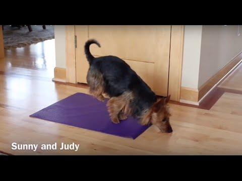 Download Dog Doing Yoga (Doga)