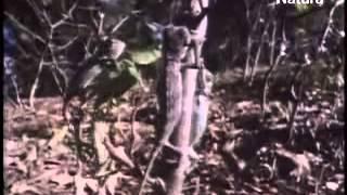 camaleones, los guerreros del arco iris - documental completo