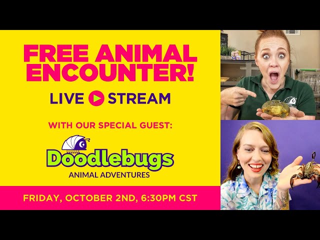  LIVE Animal Encounter with Once in a Wild & Doodlebugs Animal Adventures!! 