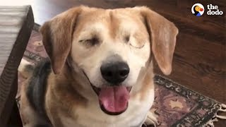 Rescued Blind Beagle Loves Life With New Family | The Dodo