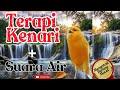 Masteran Burung Kenari Dengan Gemercik Air  Mp3 - Mp4 Download