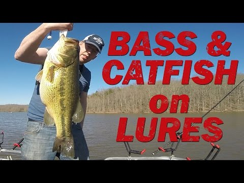 Catching catfish bait with mashed potatoes - Bluegill fishing with bobbers from YouTube · High Definition · Duration:  13 minutes 22 seconds  · 371,000+ views · uploaded on 8/23/2016 · uploaded by Catfish and Carp