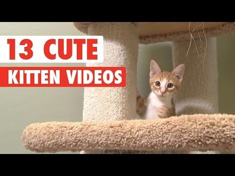 13 Cute Kittens Video Compilation 2016