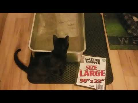 iPrimio Cat Litter Trapper EZ Clean Mat, Black, Large Chewy.com Order -Real Reviews with my Kitty!!