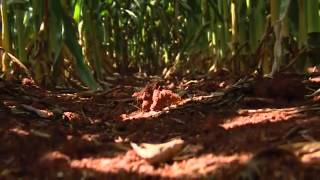 CCA Program-Agronomy Professional (David Vermeulen, CA)