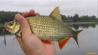 Рыбалка Южный х.Чумаки