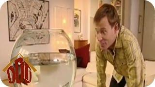 Der dressierte Goldfisch