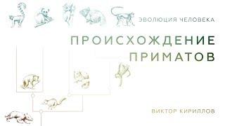 Происхождение приматов. Происхождение человека - 2