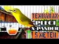 Pleci Mahal Nembak Wit Wit Panjang  Mp3 - Mp4 Download