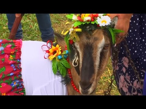 مسابقة لاختيار ملكة جمال الماعز فى أوكرانيا  - 13:54-2019 / 8 / 14