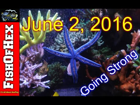 Update On My Blue Linckia Starfish Added Back In 2016