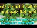 Tips to grow fast money plant in smallest pot/planter,छोटे से गमले में तेजी से मनी पलांट कैसे उगायें