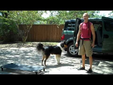 Dog training Blooper