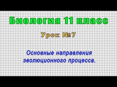 Биология 11 класс (Урок№7 - Основные направления эволюционного процесса.)