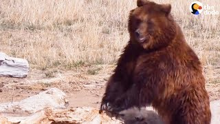 うーーん、やっぱり外は気持ちいいね!冬眠から目覚めてストレッチに励むクマ