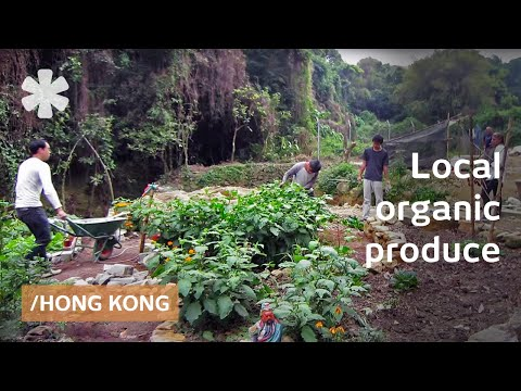 Extreme local + organic food growing in hyperdense Hong Kong