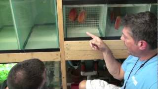 How to Breed Discus Fish - Wetpets & Friends - Video by AmericanReef