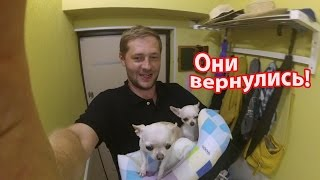 VLOG: Вся семья в сборе / Собаки вернулись домой / Клим встретился с Лизой и Георгием