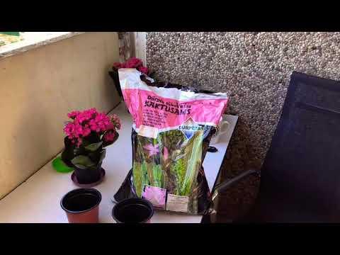 🔴Почему нужно пересаживать купленное растение из магазина и как это сделать?🔴