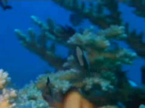Arrecifes de coral, documental discovery channel - YouTube