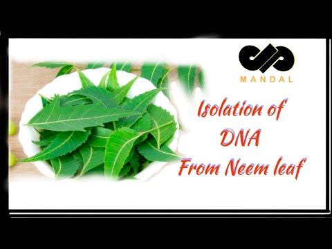 DNA  Isolation from Neem Leaf