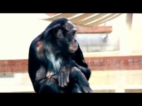 Popular Bonobo Family in Stuttgart Zoo