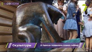 В Одессе появилась кошка-геймер