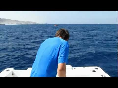 Fishing Aqaba for Sailfish