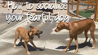 Learn the process to get a nervous dog with others
