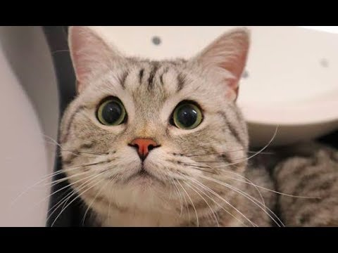 WOW - Cats and Kittens Galore. Enjoy Funny Cute Cats and Kittens Meowing Playing Videos #77