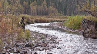 Осенняя рыбалка. Хариус и бобровая плотина.