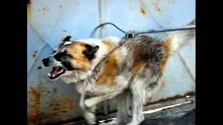 Haben wir das verdient? Für Hunde in Not!