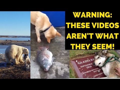 EXPOSED: The TRUTH About These Popular Viral Dog Videos. Don't Fall For These FAKE Stories!