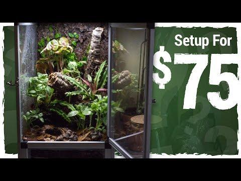 Can I Set Up a Vivarium for $75?