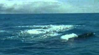 Turismo de observação de baleias jubarte - de julho a novembro