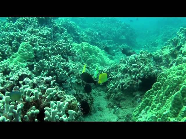 Maui Dive Sites - Maui Kai