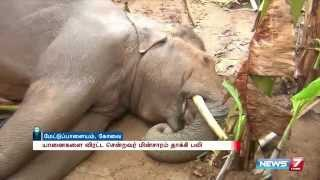 Elephant dies after being electrocuted by electric fence in agricultural land | News7 Tamil