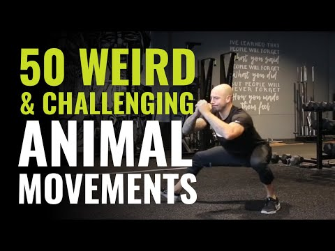 50 Weird and Challenging Animal Movements (Exercises) To Apply To Your Training
