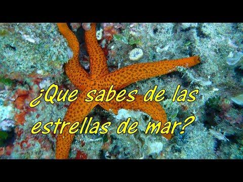 ¿Que sabes de las estrellas de mar?