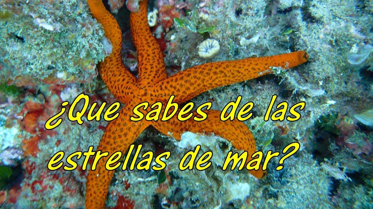 Que Sabes De Las Estrellas De Mar Youtube