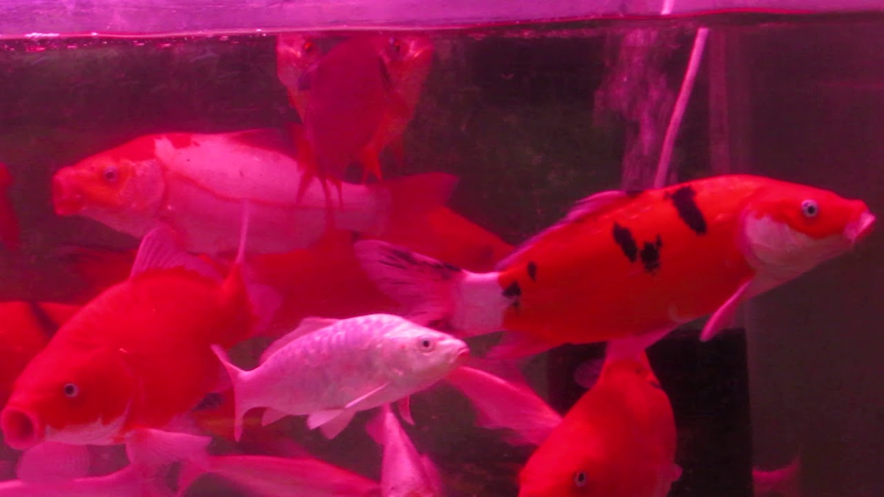 Kolathur Fish Market Fishes for sale - YouTube