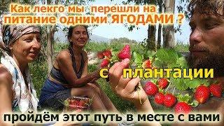 Как легко мы перешли на питание одними ягодами? (Клубника, Шелковица). Присоединяйтесь к нам!