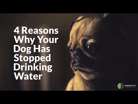 4 Reasons Why Your Dog Has Stopped Drinking Water