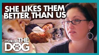 Owner Has Replaced Her Family With 6 Dogs! | It's Me or The Dog