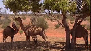 Chroniques de l'Australie sauvage - Episode 12: Le rêve de la fourmi à miel.