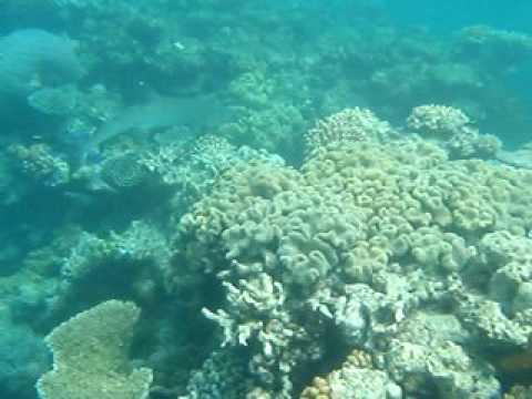 tubarao cairns australia