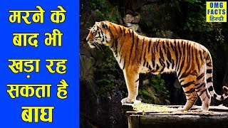 जानवरों की ये बातें , घुमा देंगी भेजा | | Amazing facts about Animals you don't know