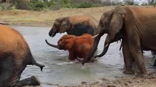 Esampu, Mundusi and Mteto move to Ithumba