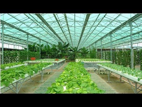 Clique e veja o vídeo Curso Cultivo Orgânico de Hortaliças em Estufa